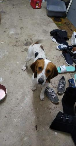 Found/Stray Male Dog last seen Eaton and Mosely circle Chesapeake, Chesapeake, VA 23320