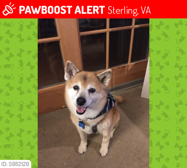 Lost Female Dog last seen Whittingham Circle and Griswold, Sterling, VA 20165