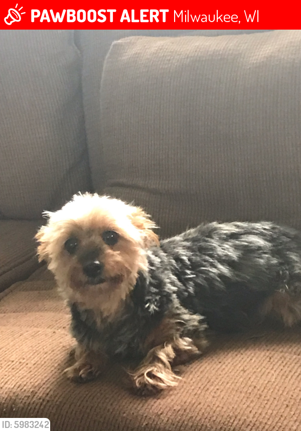 Lost Female Dog last seen Gertrude and Kathryn , Milwaukee, WI 53218