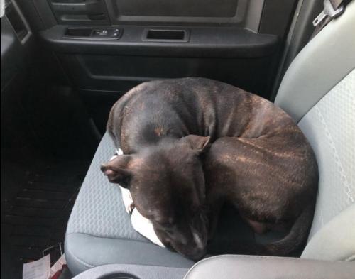 Found/Stray Male Dog last seen Laurel Cove, Virginia Beach, VA 23454
