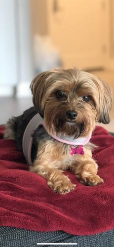 Lost Female Dog last seen Porstmouth Blvd & Dahlia, Portsmouth, VA 23702