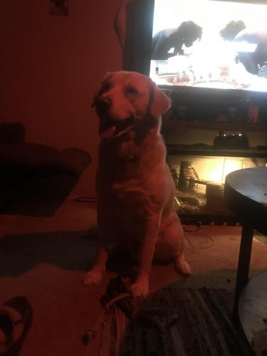 Lost Male Dog last seen Lenard , Norfolk, VA 23505