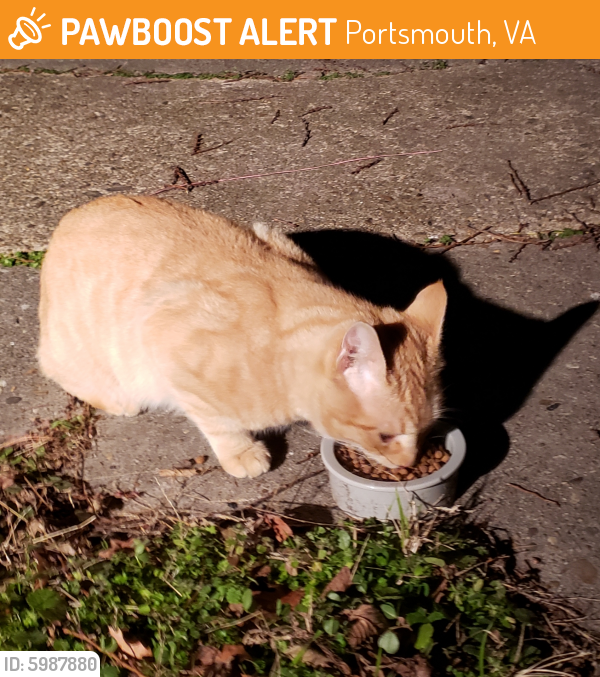Found/Stray Male Cat last seen Randolph and Parker Ave, Portsmouth, Portsmouth, VA 23704