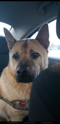 Found/Stray Male Dog last seen OConnor Crescent, Norfolk, VA 23503