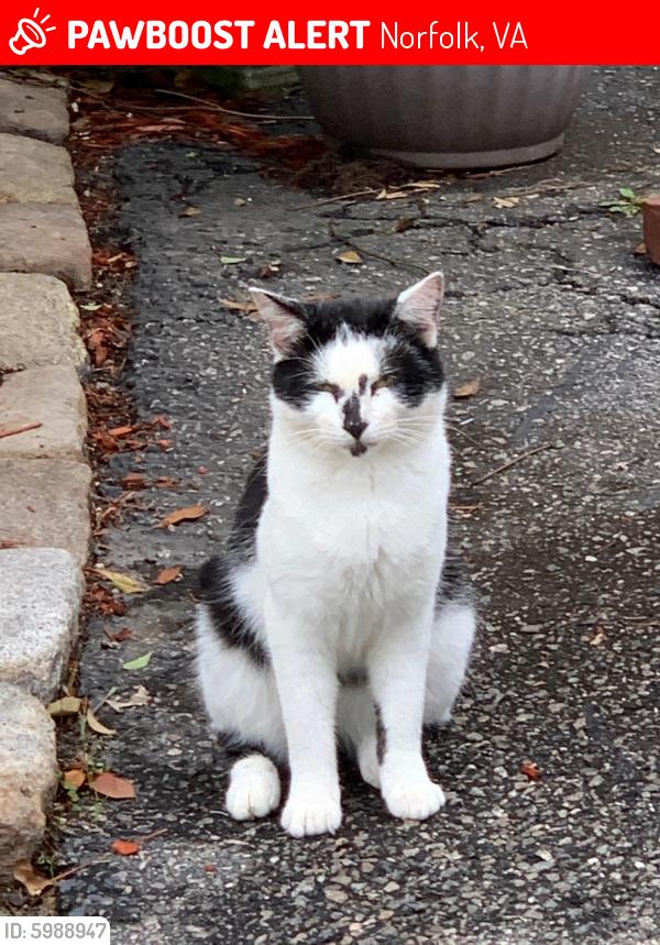 Lost Male Cat last seen Little creek road , Norfolk, VA 23518