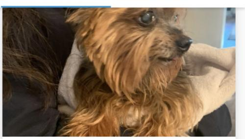 Lost Male Dog last seen Princess Anne Rd. & Englewood Dr, Virginia Beach, VA 23462