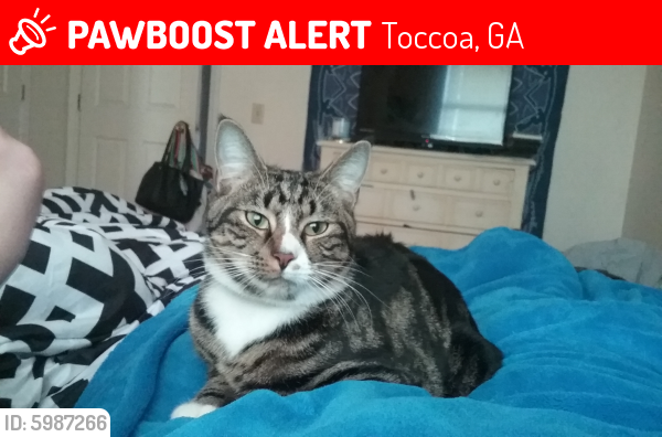 Lost Male Cat last seen Brittany Circle & W Currahee St., Toccoa, GA 30598