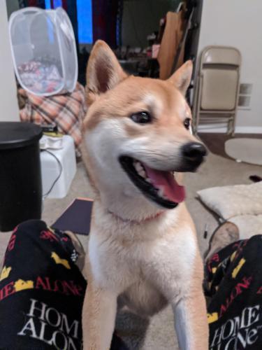Found/Stray Male Dog last seen Harper's road and Harper's square, Virginia Beach, VA 23454