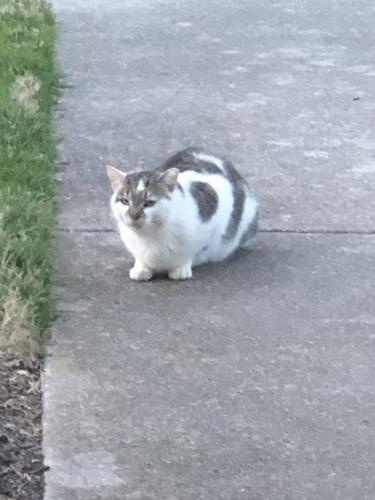 Found/Stray Unknown Cat last seen Parallel to Northampton , Virginia Beach, VA 23455