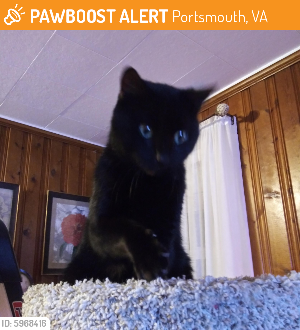 Rehomed Male Cat last seen Wyoming and California, Portsmouth, VA 23701