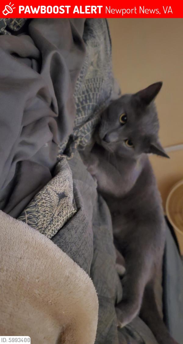Lost Male Cat last seen Near beaconsdale lane, Newport News, VA 23601