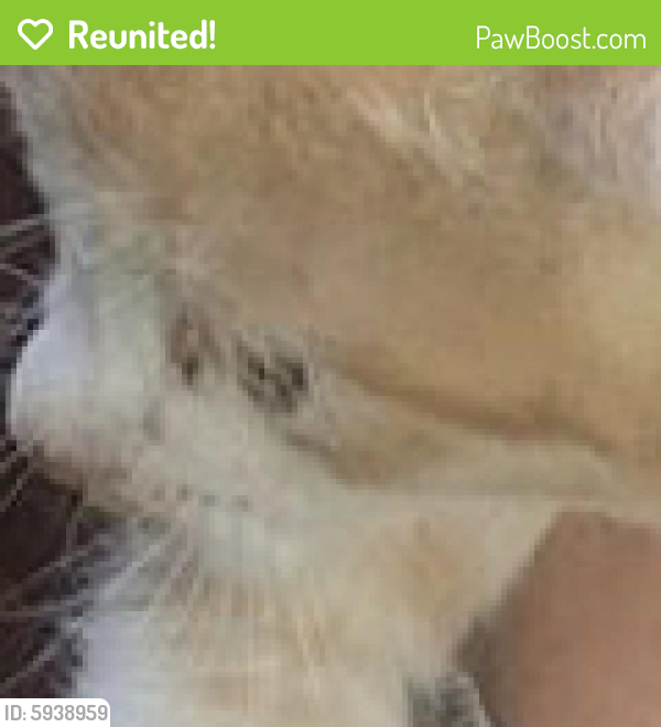 Reunited Male Cat last seen StarBucks , , OH 43003