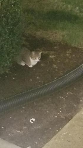 Found/Stray Unknown Cat last seen Princess Anne Gardens Condominiums , Virginia Beach, VA 23453
