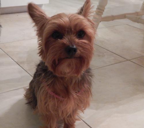 Lost Female Dog last seen Estate, Manor House Court, Dale City, VA 22193