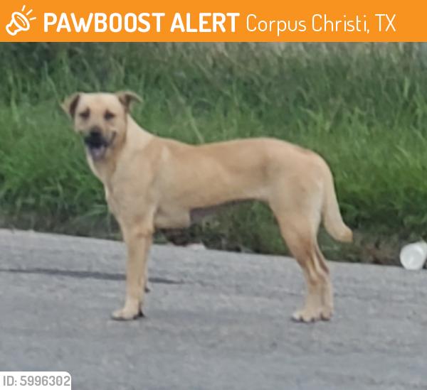 Found/Stray Female Dog last seen McArdle , Corpus Christi, TX 78411