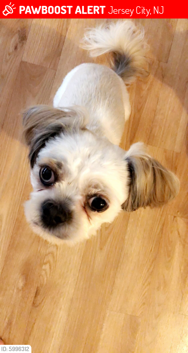 Deceased Female Dog last seen Newark , Jersey City, NJ 07306