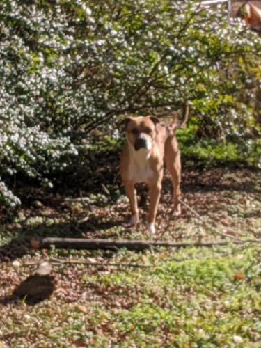 Lost Male Dog last seen Near Glendale ave, Norfolk, VA 23505