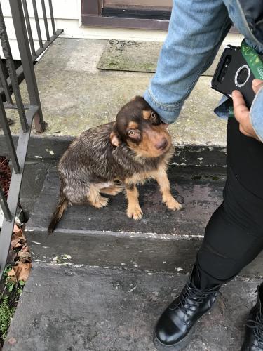 Found/Stray Unknown Dog last seen Tidewater & Biltmore Rd Norfolk 7-11, Norfolk, VA 23505
