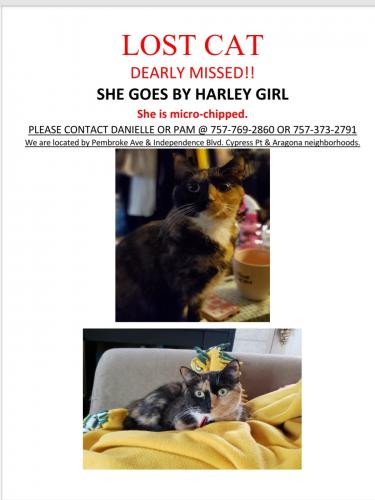 Lost Female Cat last seen Pembroke Ave & Independence Blvd , Virginia Beach, VA 23455
