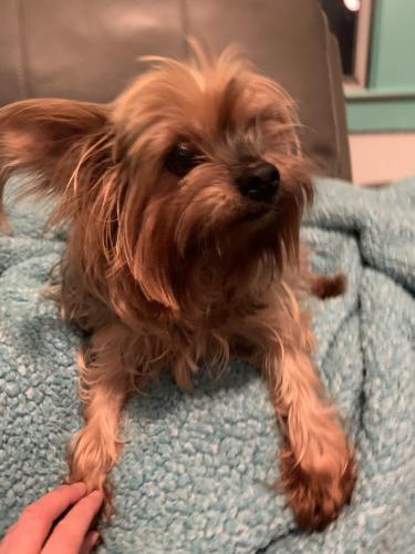 Found/Stray Female Dog last seen Maple, Norfolk, VA 23503
