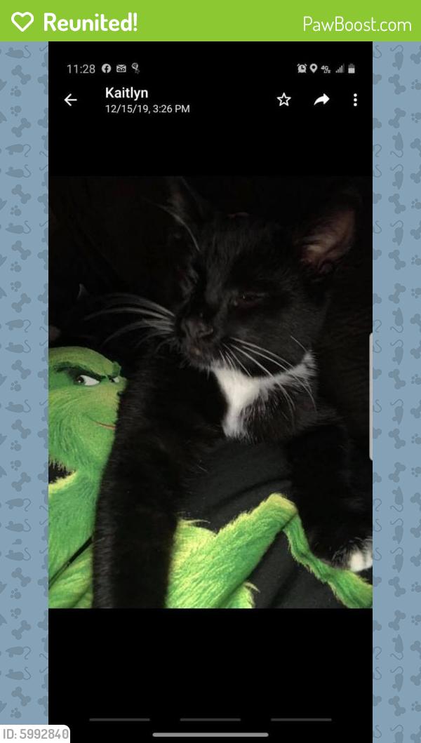 Reunited Male Cat last seen Crutchfield Dr, Tillerson Dr, Alan Dr, (Denbigh area), Newport News, VA 23602