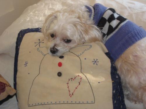Lost Male Dog last seen constance and hampshire, Virginia Beach, VA 23462