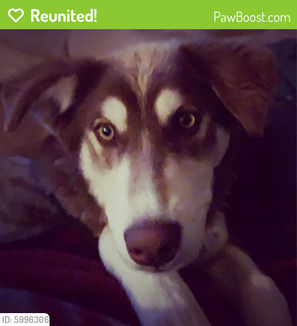 Reunited Female Dog last seen 22nd and west st, Pueblo, CO 81003