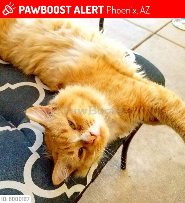 Lost Male Cat last seen 47th Street & Vineyard , Phoenix, AZ 85042