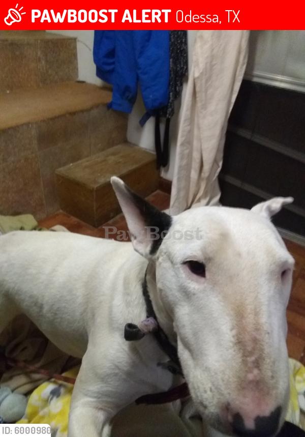 Lost Female Dog in Odessa, TX 79764 Named Wanda (ID ...