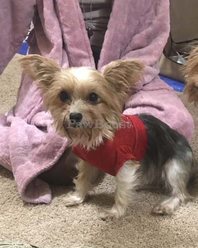 Lost Female Dog last seen Roanoke and Jefferson Streets, Portsmouth, VA 23702