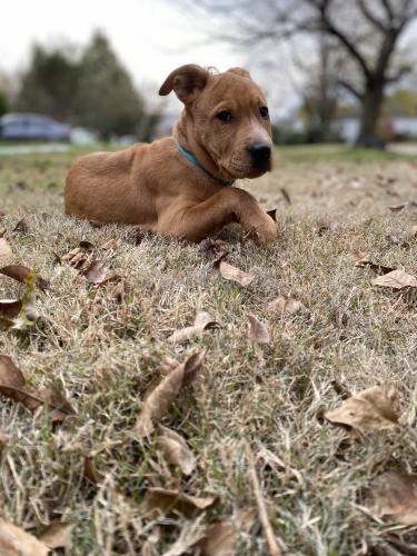 Lost Female Dog last seen Beach lake park , Newport News, VA 23601