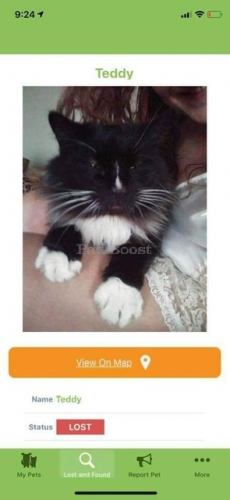 Lost Male Cat last seen Witchduck road, Virginia Beach, VA 23462