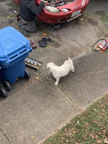 Found/Stray Male Dog last seen Foxwood Drive, Virginia Beach, VA 23462