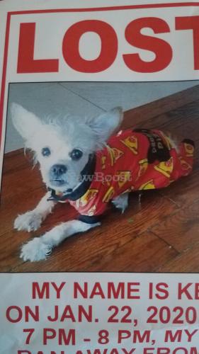 Lost Male Dog last seen 134st & Rockaway , Queens, NY 11420