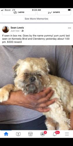 Lost Male Dog last seen Bergen Avenue, Jersey City, NJ 07304
