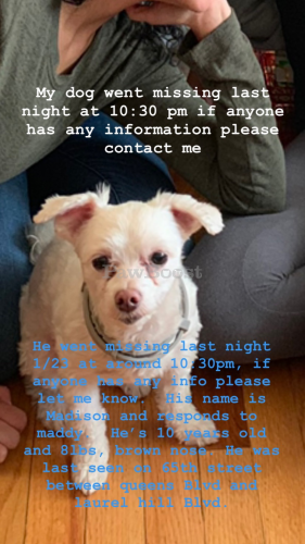 Lost Male Dog last seen 65th street and queens Blvd, Woodside, ny, 11104, Queens, NY 11377