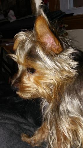 Lost Female Dog last seen Poplar lane Porsmouth  23701, Portsmouth, VA 23701