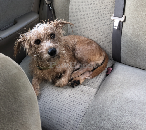 Found/Stray Male Dog last seen In neighborhood of Garwood Ave , Portsmouth, VA 23701