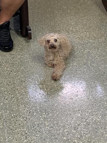 Found/Stray Female Dog last seen Butts station Rd, Chesapeake, VA 23320