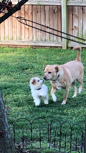 Lost Male Dog last seen Near Fentress Rd, Chesapeake, VA 23322