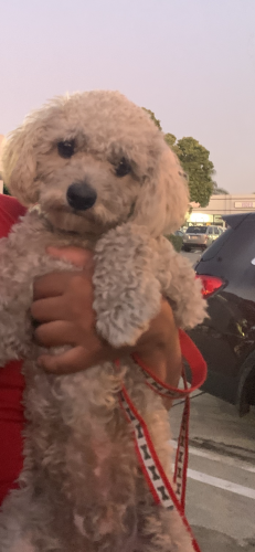 Lost Male Dog last seen Florence Ave/Garfield Blvd , Bell Gardens, CA 90201