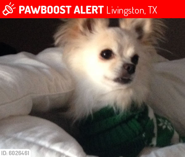 Lost Male Dog last seen Livingston TX, Livingston, TX 77351