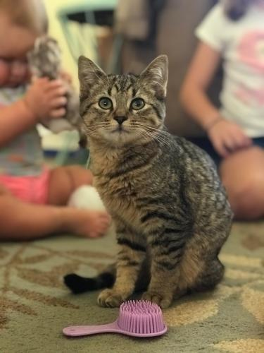 Lost Male Cat last seen Ramblewood and Riverside inside the community Spring Circle, Coral Springs, FL 33071