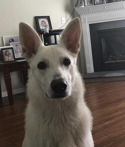 Lost Female Dog last seen Winery Dr., Chesapeake, VA 23321