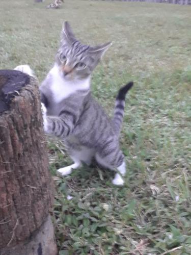 Lost Female Cat last seen Near S 14 Avenue 33009 Hillywood, Hollywood, FL 33020