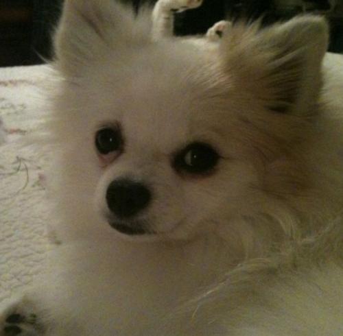 Lost Female Dog last seen Near Saber Rd. Norfolk, VA , Norfolk, VA 23510