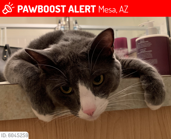 Lost Male Cat last seen University Drive by Ellsworth RD, Mesa, AZ 85207