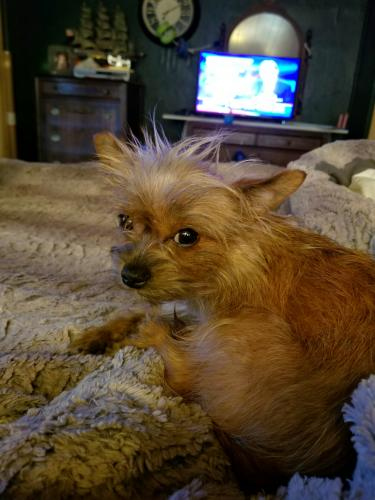 Lost Female Dog last seen 10th & Rockwell, Oklahoma City, OK 73127