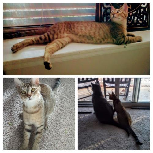 Lost Female Cat last seen Armistead Avenue and Settlers Landing Road, Hampton, VA 23669