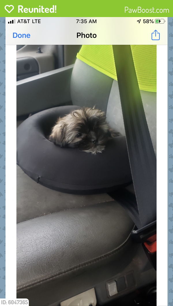 Reunited Unknown Dog last seen Near green run /lifestyles , Virginia Beach, VA 23453